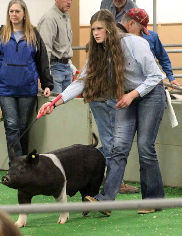 In+the+ring--FFA+freshman+Delaney+Brown+works+her+hog+around+the+show+ring+at+the+Gaines+County+Junior+Livestock+show+in+January.+Brown+shows+animals+much+of+January+and+February+each+year.