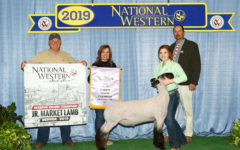 FFA members win at stock shows over past month