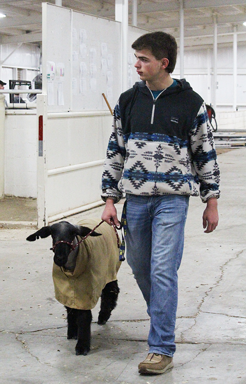 Ship shape sheep-- Junior Gunner Presley takes his lamb back to the pens after weighing at the Gaines County Livestock Show on Jan. 15. Presley would take fifth in lightweight medium wool on Jan. 17.